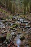Δάσος Vallombrosa, χείμαρρος 2 Στοκ εικόνα με δικαίωμα ελεύθερης χρήσης