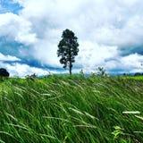 Δάσος Yai Khao Στοκ φωτογραφίες με δικαίωμα ελεύθερης χρήσης
