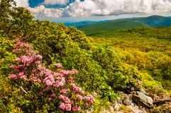 Δάφνη βουνών και άποψη του Appalachians στο πετρώδες άτομο Mounta Στοκ Εικόνες