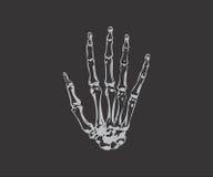 Δάχτυλο σκελετών Στοκ εικόνα με δικαίωμα ελεύθερης χρήσης