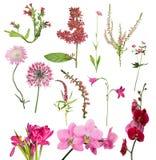 Δέκα τρία κόκκινα λουλούδια στο λευκό Στοκ φωτογραφία με δικαίωμα ελεύθερης χρήσης