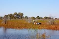 Δέλτα Okavango Στοκ εικόνα με δικαίωμα ελεύθερης χρήσης