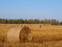 Δέματα αχύρου στο συγκομισμένο τομέα δημητριακών, γεωργία φθινοπώρου backgr Στοκ Εικόνες