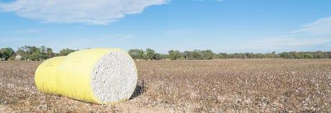 Δέματα βαμβακιού κινηματογραφήσεων σε πρώτο πλάνο στο συγκομισμένο τομέα στο Τέξας, ΗΠΑ στοκ εικόνες