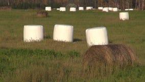 Δέματα σανού στο πλαστικό στον αγροτικό τομέα απόθεμα βίντεο