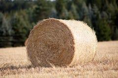 Δέμα αχύρου cornfield στη συγκομιδή το καλοκαίρι Στοκ Εικόνα