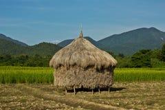 Δέμα του ρυζιού Στοκ Εικόνες