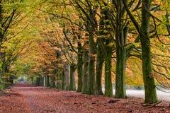 δέντρα άμμου παρόδων φθινοπώ Στοκ Εικόνες