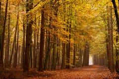 δέντρα άμμου παρόδων φθινοπώ Στοκ Φωτογραφία