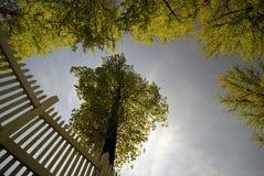 δέντρα άνοιξης στύλων φραγών Στοκ Εικόνα