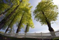 δέντρα άνοιξης φραγών Στοκ Εικόνες