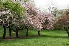 δέντρα άνοιξη λουλουδιών Στοκ εικόνα με δικαίωμα ελεύθερης χρήσης