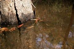 Δέντρα άνοιξη που ξαπλώνουν για να καλύψουν τη σκιά που λαμβάνεται από την κατώτατη άποψη του δέντρου Στοκ εικόνα με δικαίωμα ελεύθερης χρήσης