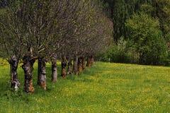 δέντρα άνοιξη σειρών στοκ φωτογραφίες με δικαίωμα ελεύθερης χρήσης