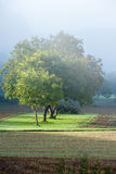 Δέντρα άνοιξη στην υδρονέφωση Στοκ εικόνα με δικαίωμα ελεύθερης χρήσης