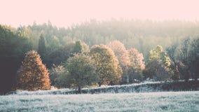 δέντρα έλατου σε ένα λιβάδι κάτω από τη θέληση στο κωνοφόρο δάσος στο fogg στοκ φωτογραφία με δικαίωμα ελεύθερης χρήσης
