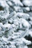 δέντρα έλατου Στοκ εικόνες με δικαίωμα ελεύθερης χρήσης