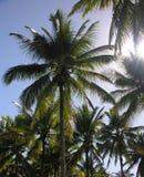 δέντρα ήλιων φοινικών Στοκ εικόνα με δικαίωμα ελεύθερης χρήσης