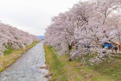 Δέντρα ή sakura ανθών κερασιών κατά μήκος των όχθεων του ποταμού Funakawa Στοκ Εικόνα