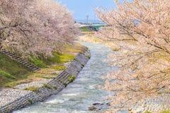 Δέντρα ή sakura ανθών κερασιών κατά μήκος των όχθεων του ποταμού Funakawa Στοκ εικόνες με δικαίωμα ελεύθερης χρήσης