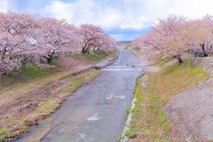 Δέντρα ή sakura ανθών κερασιών κατά μήκος των όχθεων του ποταμού Funakawa Στοκ φωτογραφία με δικαίωμα ελεύθερης χρήσης