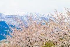 Δέντρα ή sakura ανθών κερασιών στην πόλη Asahi, δημόσιες σχέσεις του Toyama Στοκ εικόνα με δικαίωμα ελεύθερης χρήσης