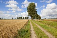 Δέντρα αγροτικής διαδρομής και λευκών Στοκ Εικόνες