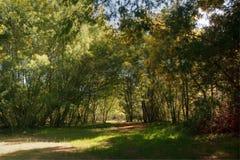 Δέντρα ακακιών στοκ εικόνα με δικαίωμα ελεύθερης χρήσης