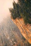 δέντρα ακρών απότομων βράχων Στοκ εικόνες με δικαίωμα ελεύθερης χρήσης