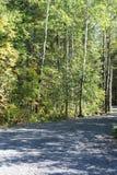 Δέντρα ακρών του δρόμου Στοκ εικόνες με δικαίωμα ελεύθερης χρήσης