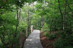 δέντρα αλεών Στοκ εικόνα με δικαίωμα ελεύθερης χρήσης