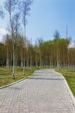δέντρα αλεών Στοκ φωτογραφία με δικαίωμα ελεύθερης χρήσης
