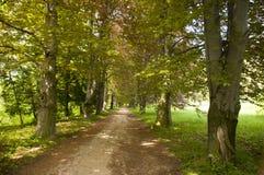 δέντρα αλεών Στοκ Φωτογραφία