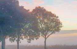 Δέντρα λαμβάνοντας υπόψη την ανατολή Στοκ φωτογραφίες με δικαίωμα ελεύθερης χρήσης