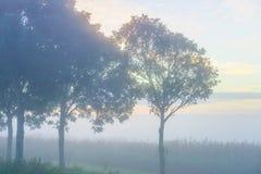 Δέντρα λαμβάνοντας υπόψη την ανατολή Στοκ Εικόνες