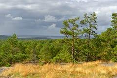 Δέντρα αναμμένα με τον ήλιο πριν από thunder-storm Στοκ φωτογραφία με δικαίωμα ελεύθερης χρήσης