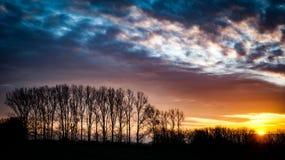 Δέντρα ανατολής και λευκών Στοκ Εικόνες