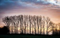 Δέντρα ανατολής και λευκών Στοκ φωτογραφίες με δικαίωμα ελεύθερης χρήσης
