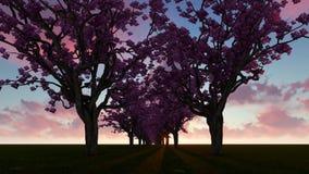 Δέντρα ανθών κερασιών αλεών ελεύθερη απεικόνιση δικαιώματος