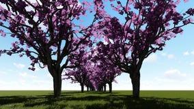 Δέντρα ανθών κερασιών αλεών απεικόνιση αποθεμάτων