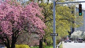 Δέντρα ανθών κερασιών Στοκ εικόνες με δικαίωμα ελεύθερης χρήσης