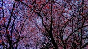 Δέντρα ανθών στοκ εικόνες