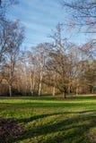 Δέντρα ανοίξεων του Σιάτλ Στοκ Εικόνες