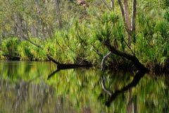 δέντρα αντανακλάσεων Στοκ εικόνα με δικαίωμα ελεύθερης χρήσης