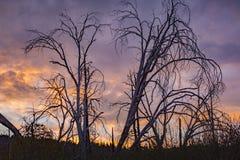 Δέντρα αποκριών Στοκ φωτογραφίες με δικαίωμα ελεύθερης χρήσης