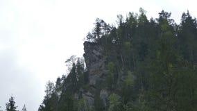 Δέντρα απότομων βράχων και του FIR βουνών φιλμ μικρού μήκους