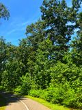Δέντρα από έναν δρόμο στοκ εικόνες με δικαίωμα ελεύθερης χρήσης