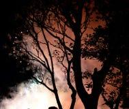 Δέντρα από τη σκιαγραφία και τα πυροτεχνήματα Στοκ φωτογραφία με δικαίωμα ελεύθερης χρήσης