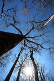 Δέντρα αδανσωνιών στο εθνικό πάρκο Ankarana, αγριότητα της Μαδαγασκάρης Στοκ φωτογραφία με δικαίωμα ελεύθερης χρήσης