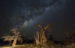 Δέντρα αδανσωνιών τη νύχτα κάτω από τα αστέρια Στοκ Εικόνες